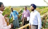 kanniyakumar cyclone area banana trees damage